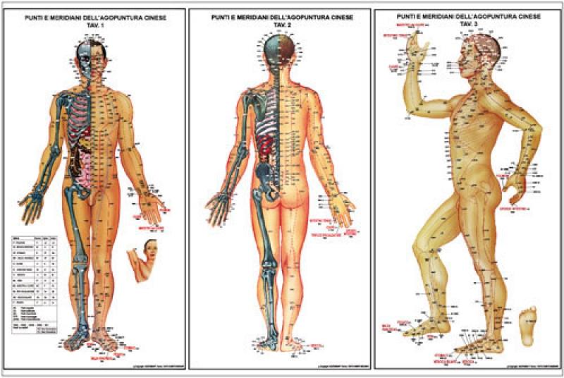 Agopuntura: la Dottoressa Monica Giors ci parla dei meridiani