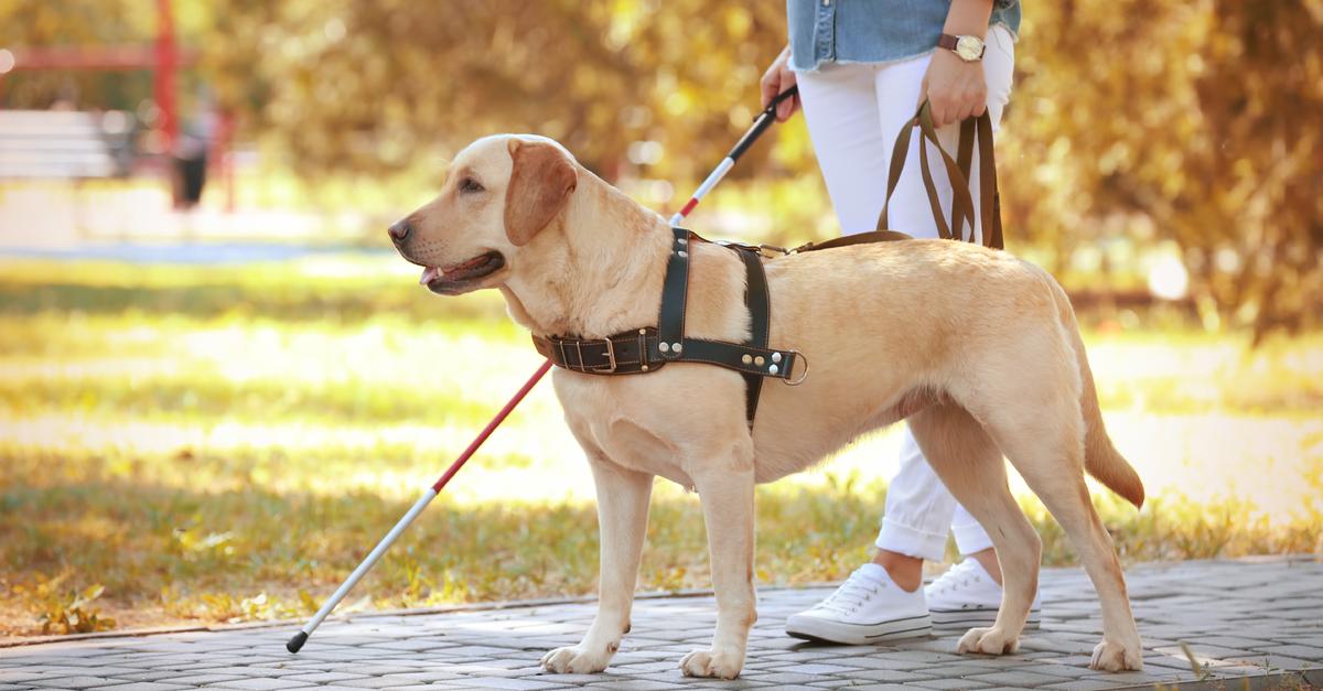 Orbassano: giornata nazionale del cane guida