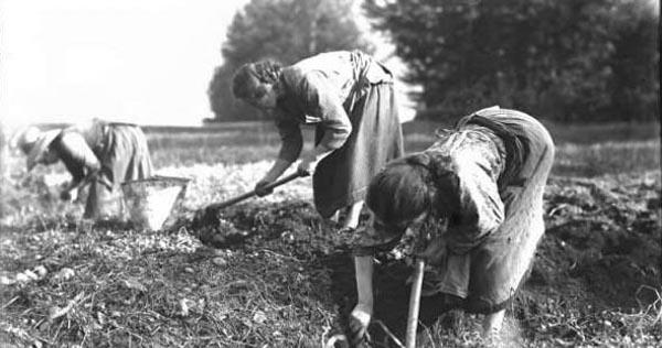 Curiosità d'altri tempi: le attività agricole