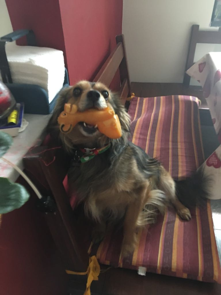 Al via una raccolta fondi per aiutare Tommy, il cagnolino affetto da neoplasia ipofisaria – Ne abbiamo parlato con Marco Giavelli