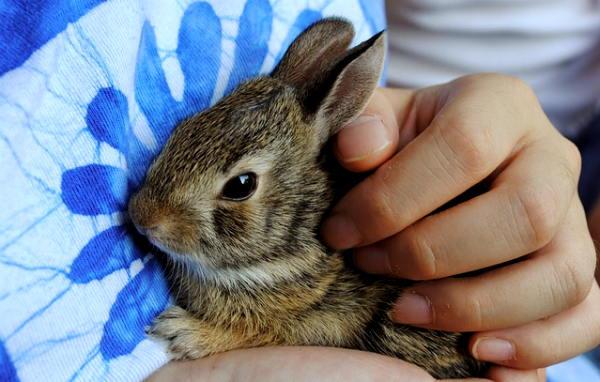 """""""La parola all'esperto"""": i conigli. Ne abbiamo parlato con la veterinaria Alice Andolfatto"""